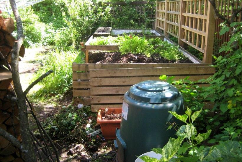 Kõik, mida pead teadma kompostimisest koduaias