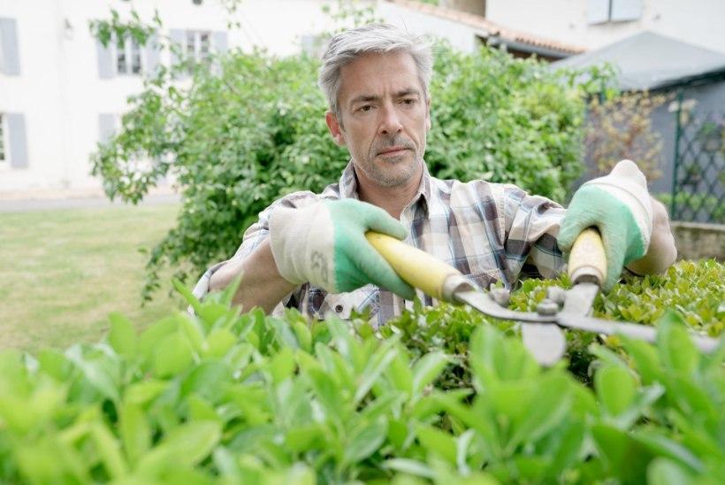 ERITI OHTLIK MEESTELE: nendega juhtub aiatöödel poole rohkem õnnetusi kui naistega