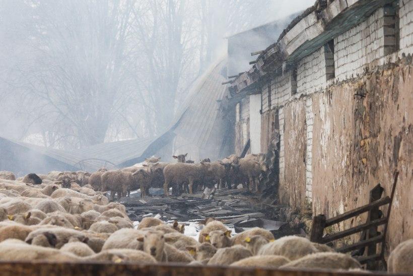 MÄRTS PILDIS | Ossinovski saabus Kadriorgu igluga, Nurmiko aiand tõusis fööniksina tuhast, Kallasel tõmmati vaip alt