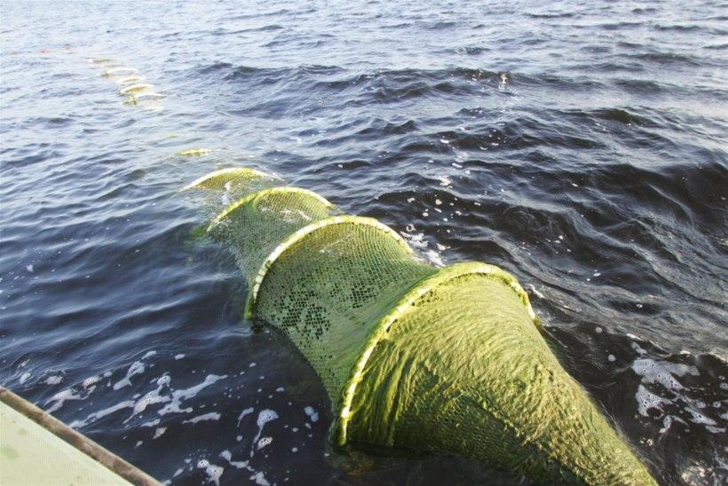Muutuv eeskiri toob kaluritele püügirahu