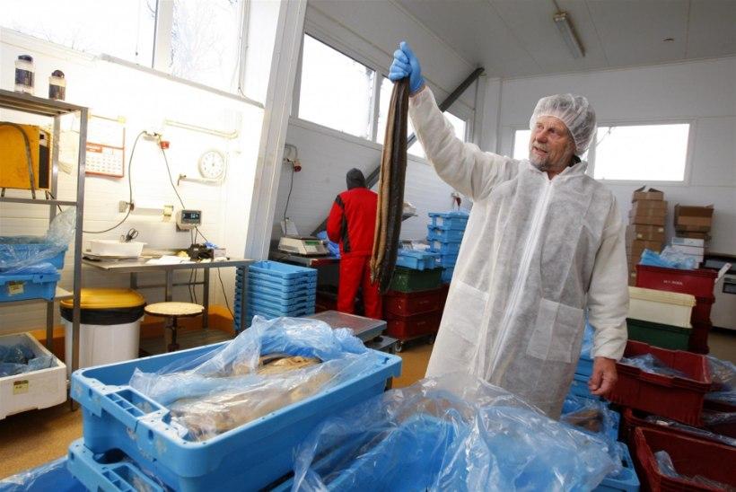 Kas Eestis müüdav kala on ikka värske? Eesti suurim kalakaupmees räägib äri telgitagustest
