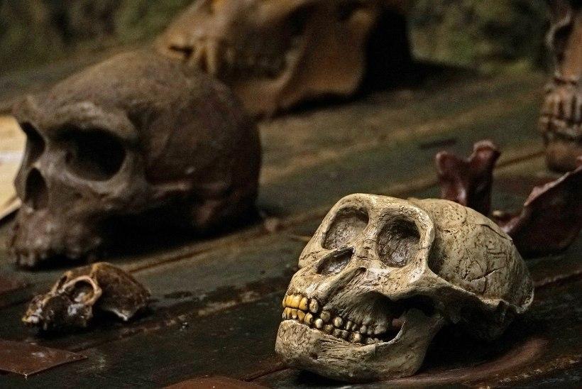 19. sajandi arst: kurjategijatel on loomade tunnusjooned