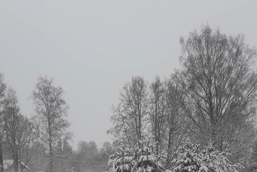 GALERII | VASTLAKS MAA VALGEKS: terve päeva sajab lund, õhtul läheb veel külmemaks