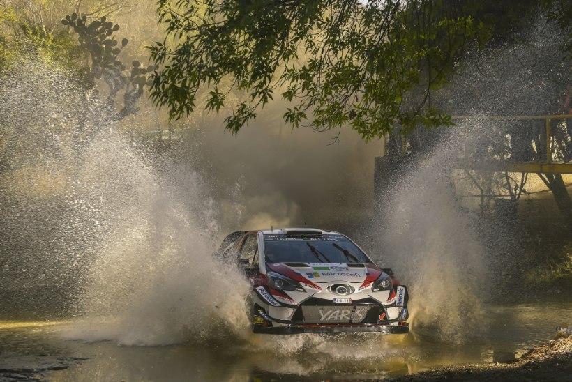 Toyota ja Mehhiko ralli – seni vaid tuska valmistanud kooslus
