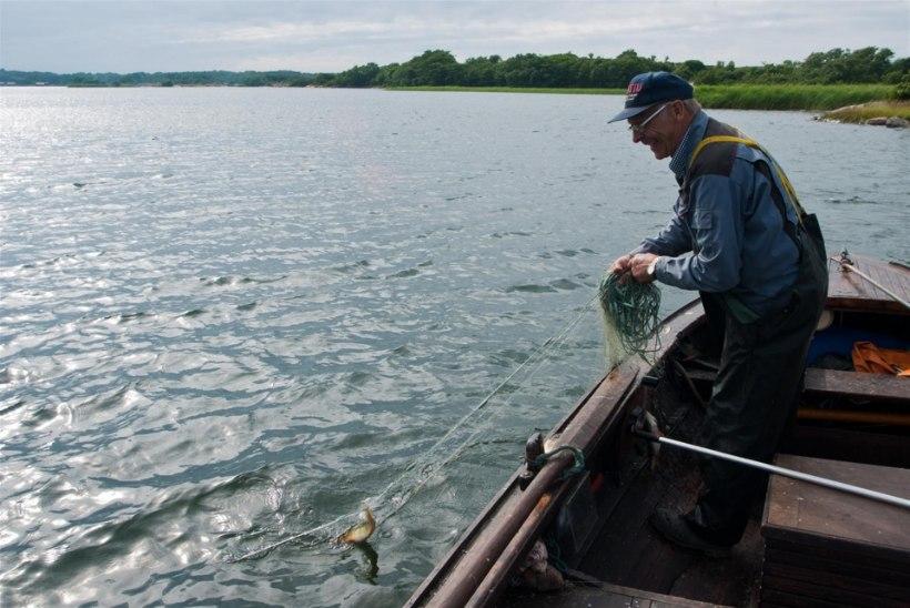 Uuring: merede soojenemine põhjustab püsivalt kalavarude kahanemist
