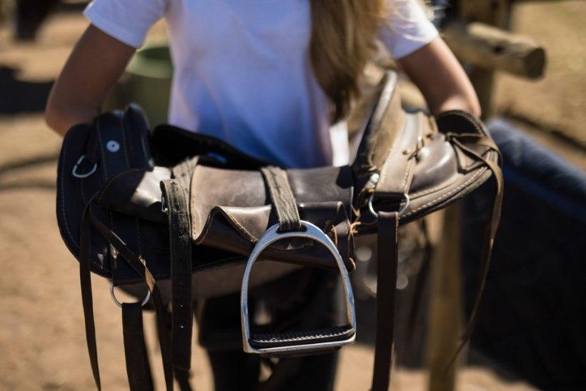 Olematut hobusesadulat müünud kelm sai kohtus karistuse kätte