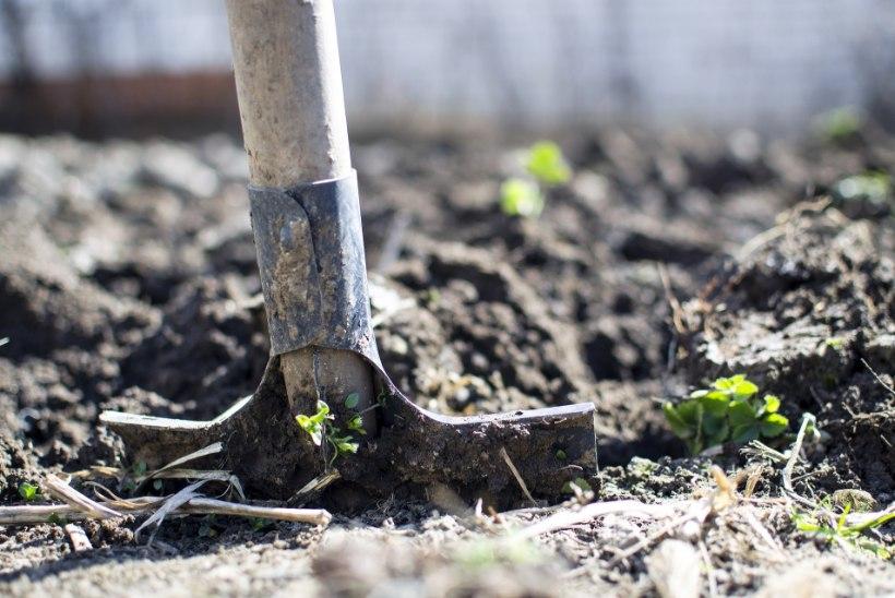 APRILL AIAS | Praegustest aiatöödest lõikad kasu suvel