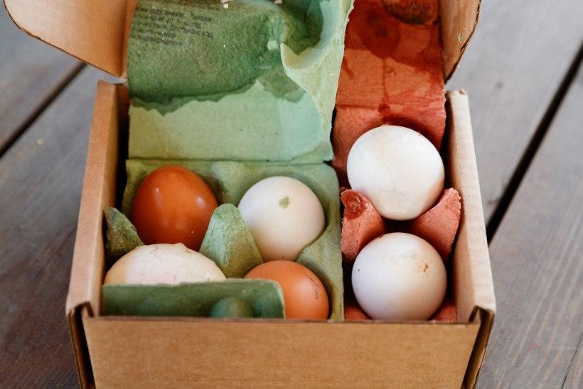 ÕL VIDEO   Õhtulehe katse: milline firma toob pakiautomaati kohale munad, milline teeb neist omleti