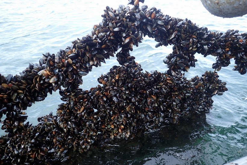 AUSTRID OMA RANNAST? Karbikasvatused aitaks Läänemerd puhastada