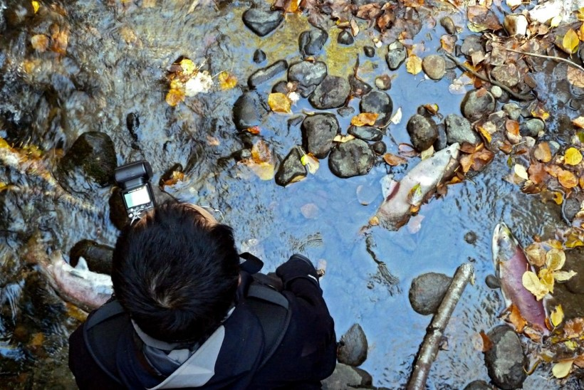 Haigused on Šotimaa lõhefarmides tapnud miljoneid kalu