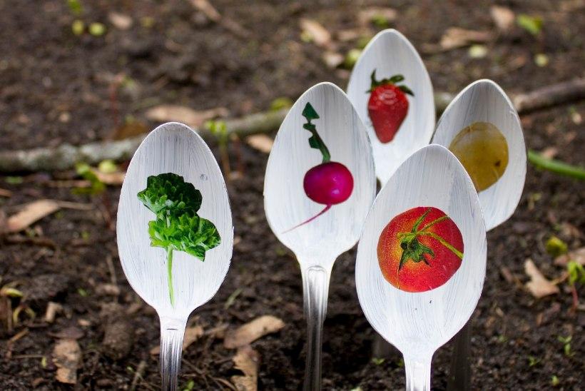 Naabruskonna pilkupüüdvaim peenar ehk 10 originaalset taimesildi ideed
