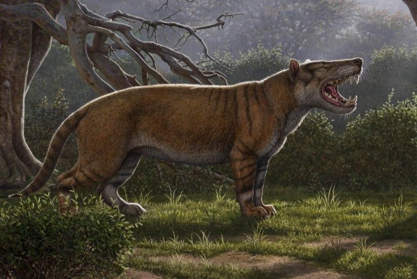 1500 KILOGRAMMI: Keenias avastati hiiglasliku eelajaloolise kiskja jäänused