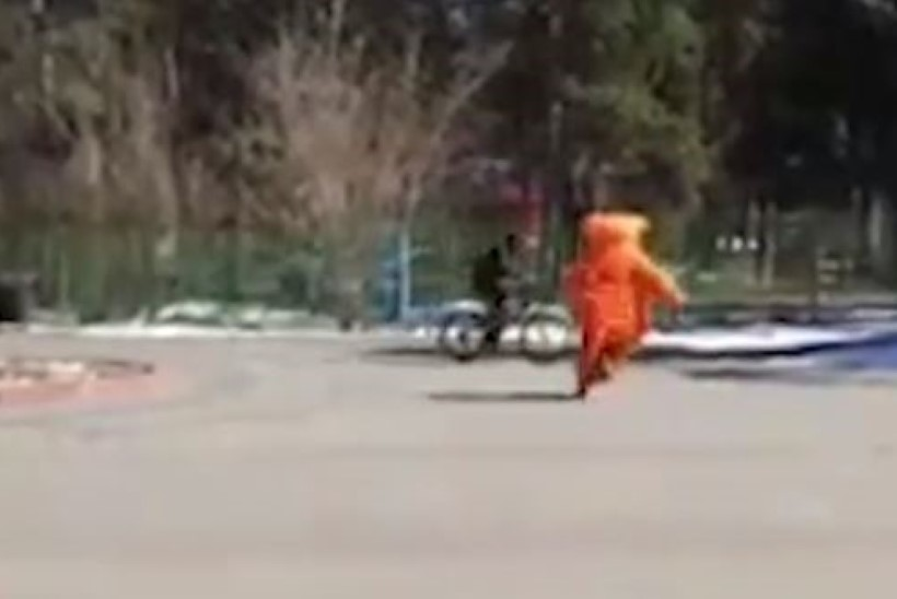 Видео: россиянин в костюме огромного рыжего кота поймал вора