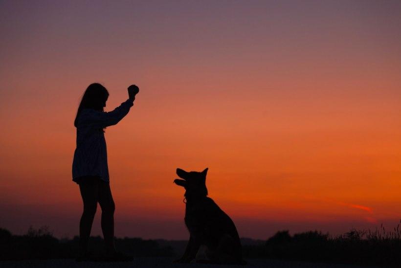 LEMMIK | Kuidas valida koera?