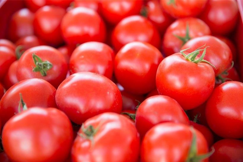 Aprillis on viimane aeg külvata tomateid ja kurke