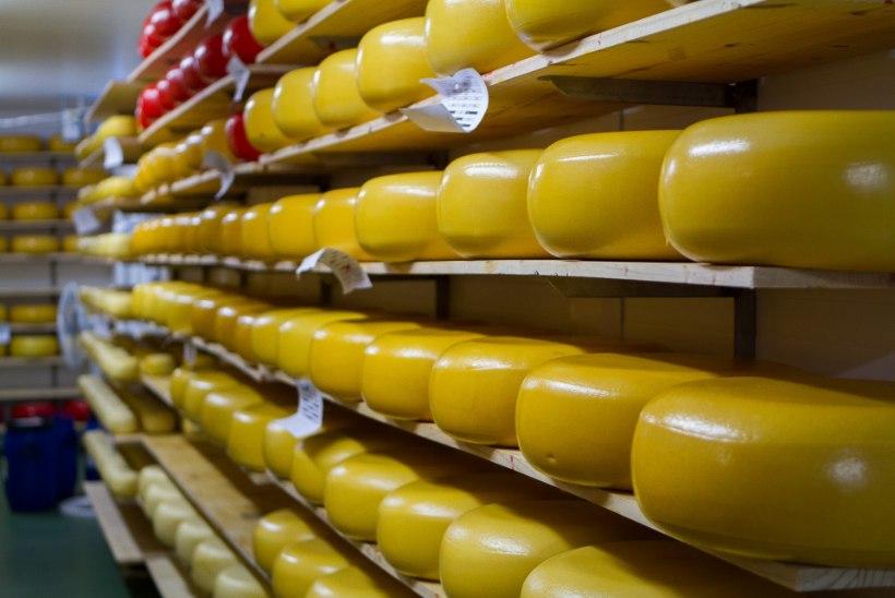 Eksport hoiab tööstust vee peal: ligi pool Eesti piimatoodangust müüakse välismaale