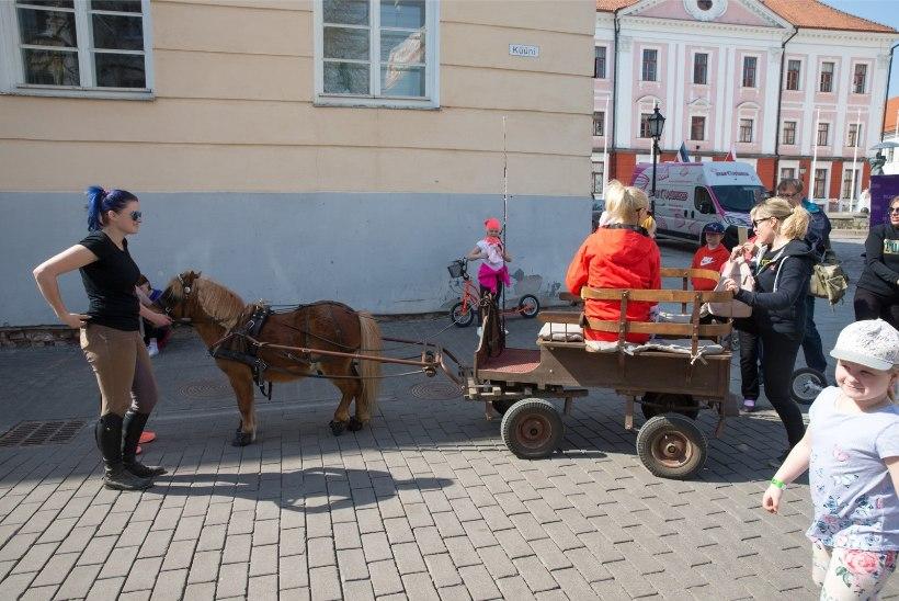 GALERII | Maamess alustab: Tartu linnapea pandi kartuleid kasvatama