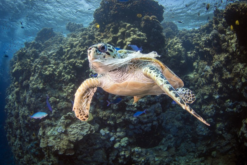 ÄRA VISKA VETTE EGA MAHA! Kõige enam tekitavad ookeanireostust suitsukonid