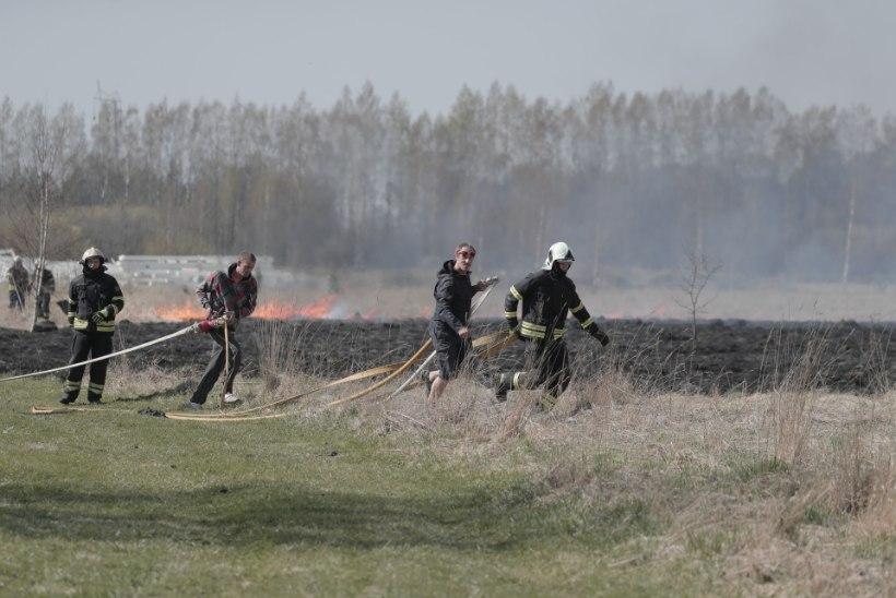 GALERII | Pärnumaal põles 17 hektarit heinamaad, ohtu sattusid ka kolm majapidamist