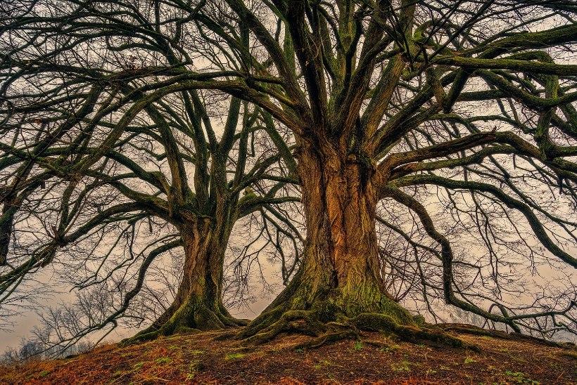 AVESTA 26. aprill | Tänase päeva sümbol on elu puu ja märksõna surematus