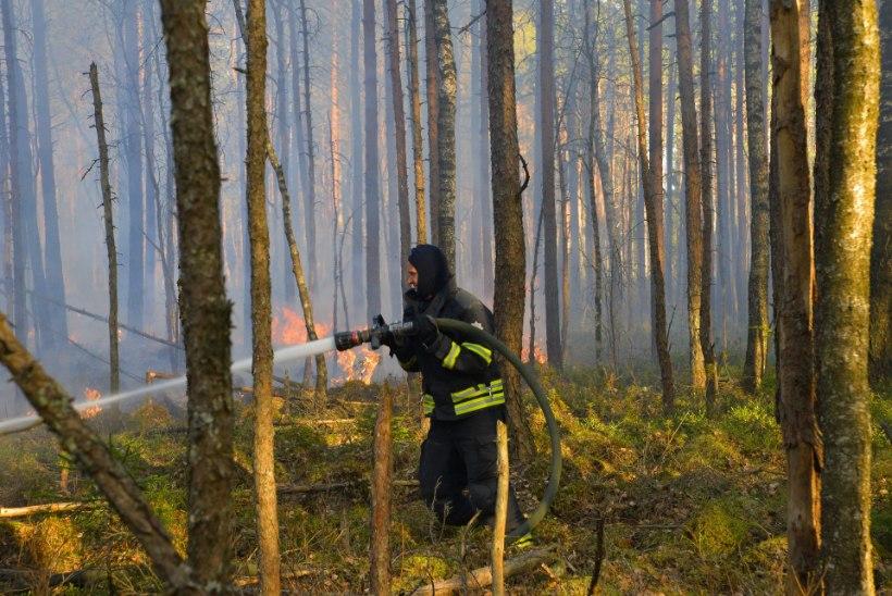 GALERII | Eestis on ülimalt tuleohtlik aeg! Pärnu- ja Viljandimaal põles suur metsamaa