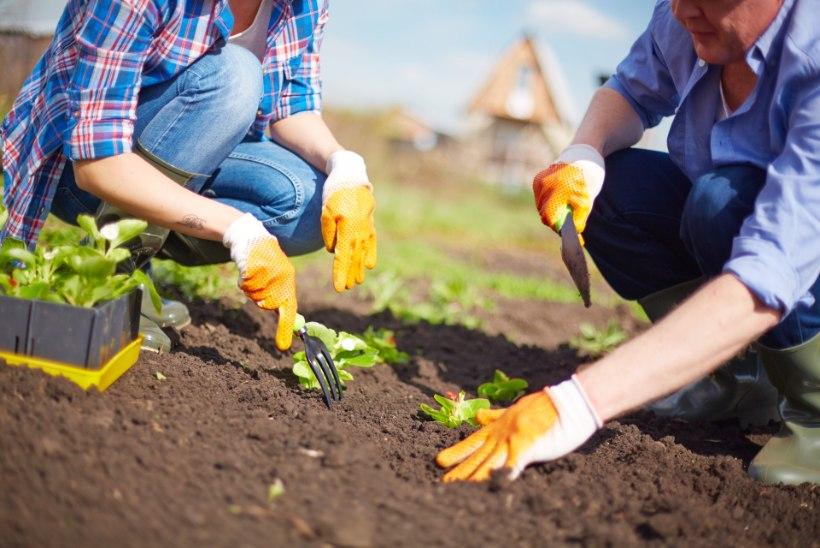 PANE TÄHELE: see on aprillikuu aiatööde meelespea!