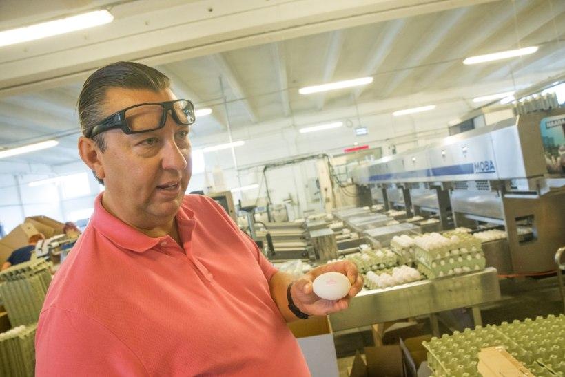 Eesti suurim munatootja pidi salmonellabakteri tõttu hukkama 54 000 kana