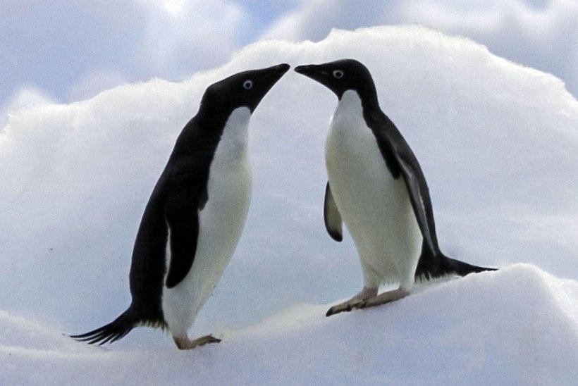 PÄEVA KASUTU FAKT | Tinderist leiab kaaslase ka Antarktikas