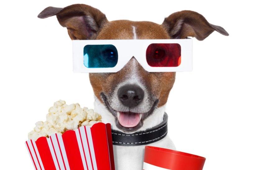 Koeraga kinno! Tallinnas alustab koerte kinoklubi