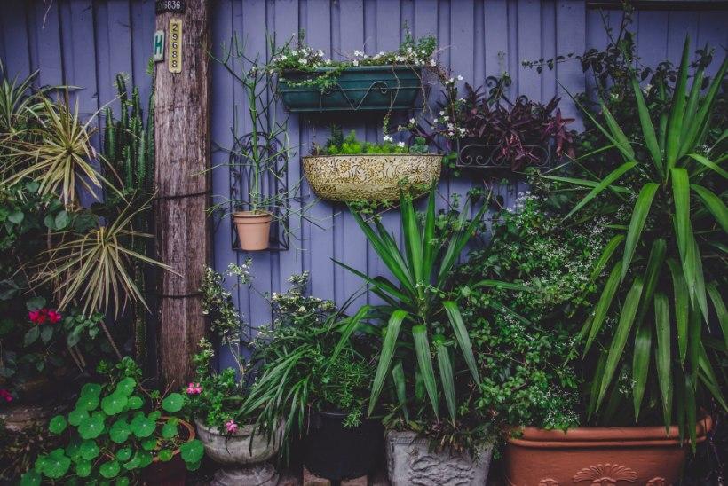 SOOLALEIVAKINGITUS | 10 asja, mida iga uus koduomanik ihkab