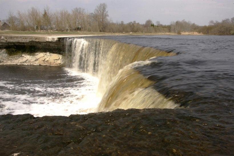 Eesti on ainus Läänemere riik, kes suudaks taastada kõik oma lõhejõed