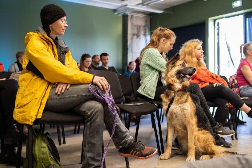 GALERII   Telliskivis korraldati koertele kinoseanss