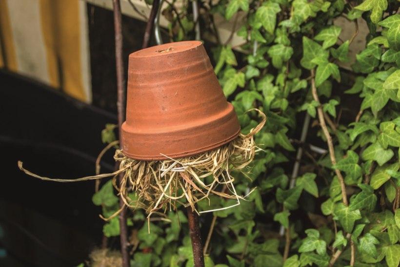 AED | Putukate põnevad hotellid