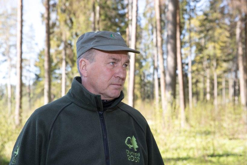Metsamehed mures: pärast põuast suve hävitab kooreürask kuusemetsi