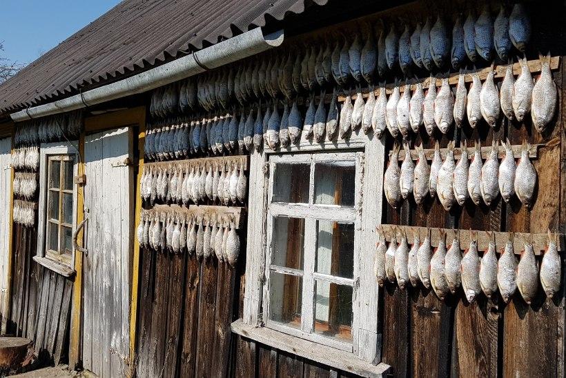 Pöline kaluritoit kuivatatud kalast. Lugu sellest, kuidas mulle Instagramis räägiti vanaema kuivakala-kastmest