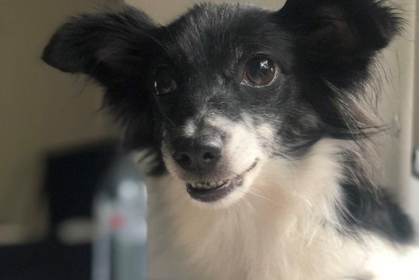 Eeva Esse: eks koer pereliikmena olegi osa elust ja püüan teda oma tegemistesse kaasata igal võimalusel
