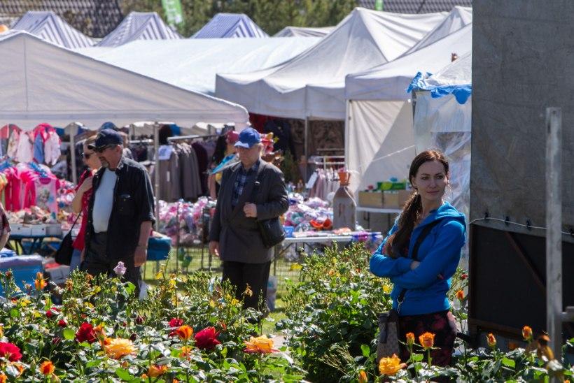 POLIITROHELUSE JAHIL: Türi lillelaat oli helmekaktustest tühjaks ostetud