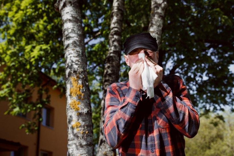 Allergikud elavad teadmatuses: õietolmukaardi uuendused viibivad