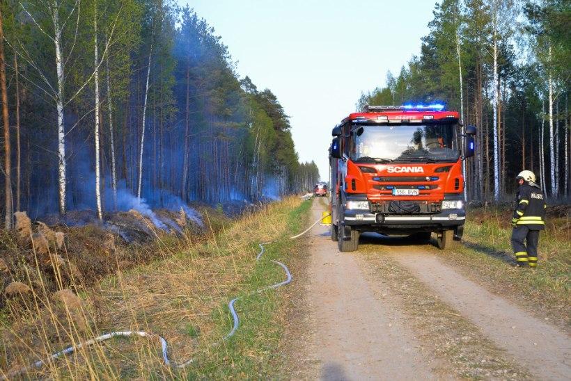 VIDEO JA FOTOD | Viljandimaal põles 22 hektarit metsa