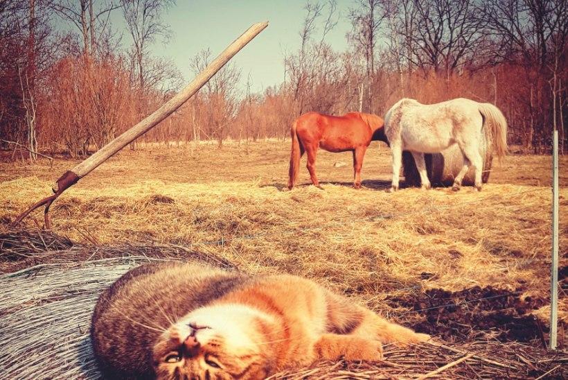 Heidi Hanso Pajuvärava lood | Loomad õpetavad elu tõelisi väärtusi