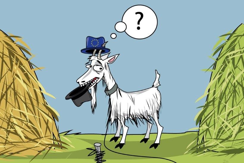 Rahva dilemma: kas vaba on kaabu või sõna?