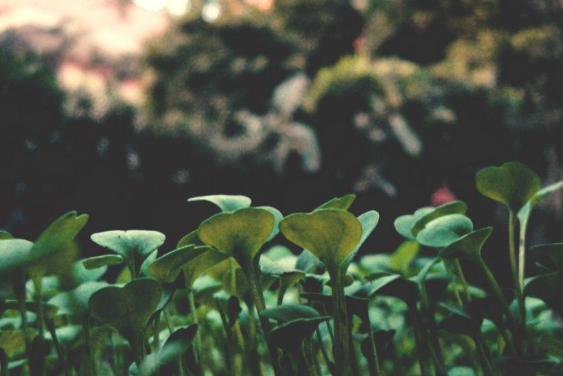 TAIMENURK   Kuidas luua hooldusvaba kuhikpeenart?