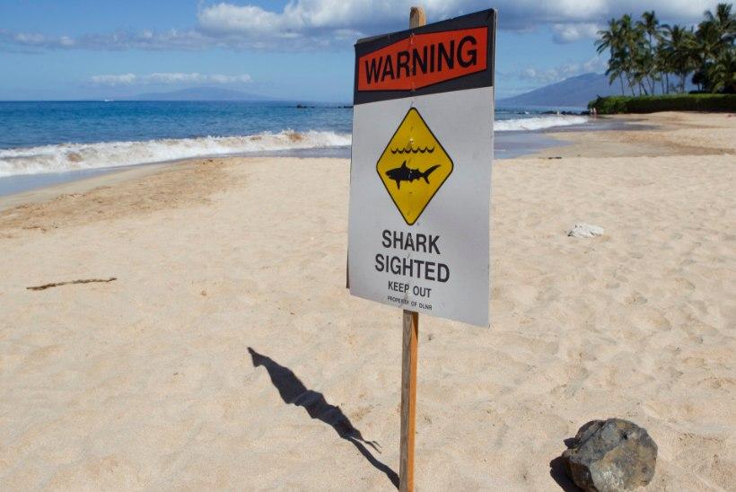 SURM PARADIISISAAREL: hai tappis Maui rannikul ujuja