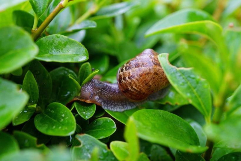 9 soovitust, kuidas lihtsate vahenditega teod aiast minema peletada