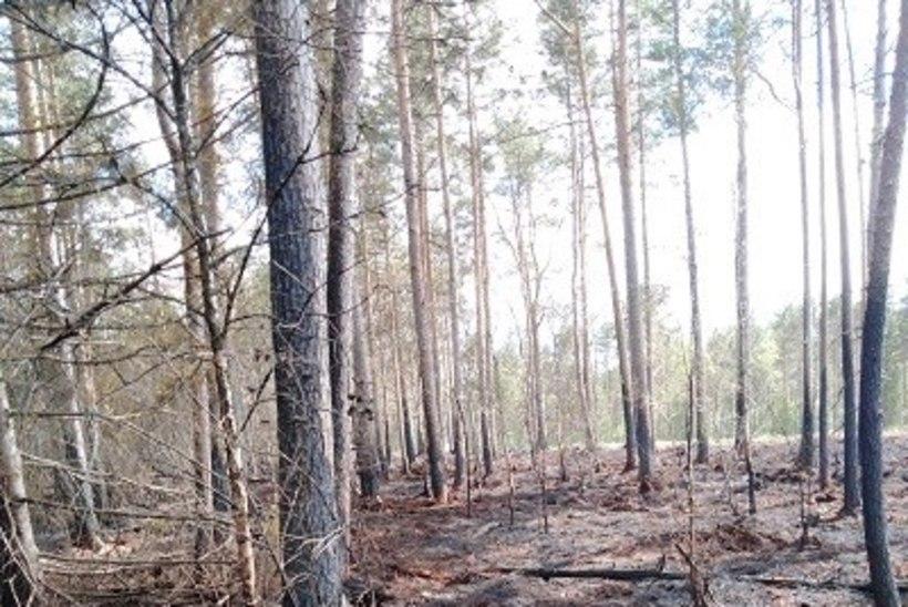 FOTO   ÜHEST SÄDEMEST PIISAB: Nädalavahetusel põles Hiiumaal mitu hektarit metsa