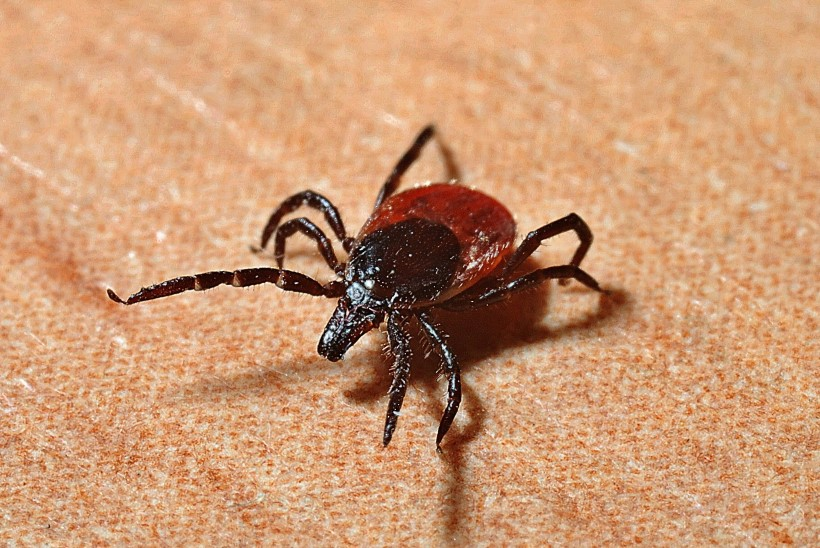ERAKORDNE PUUGIUPUTUS: mida teha, et vältida nakatumist puugihaigustesse?