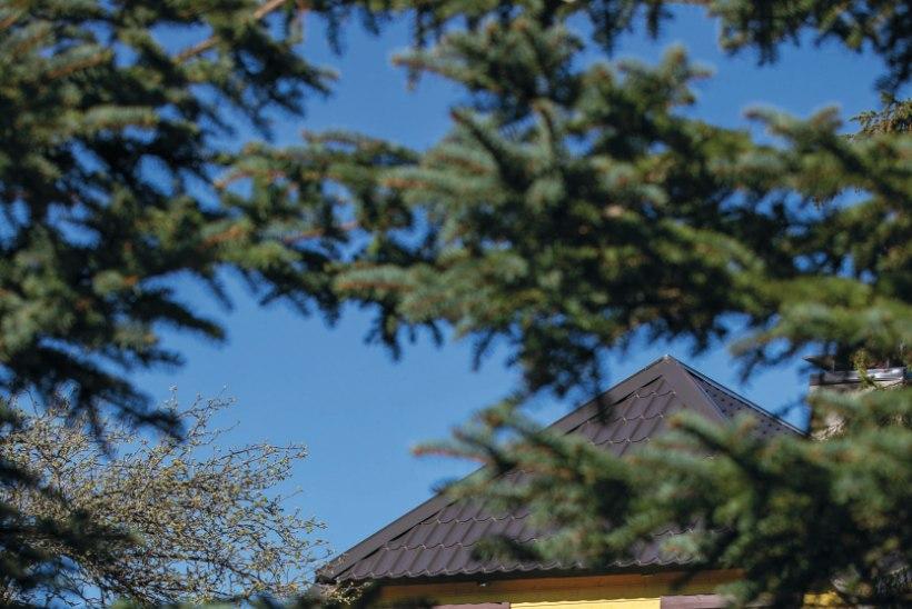 Kitsa külatee viimane maja: vanast talust Hüüru mõisa õunaaias valmib imeline kodu