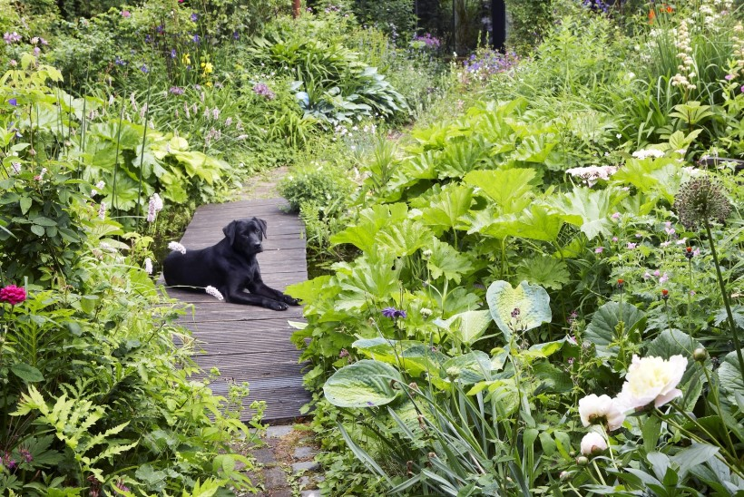 Pissilaigud, tallutud peenrad ja kaevikud ehk Kas koer ja ilus aed passivad kokku?