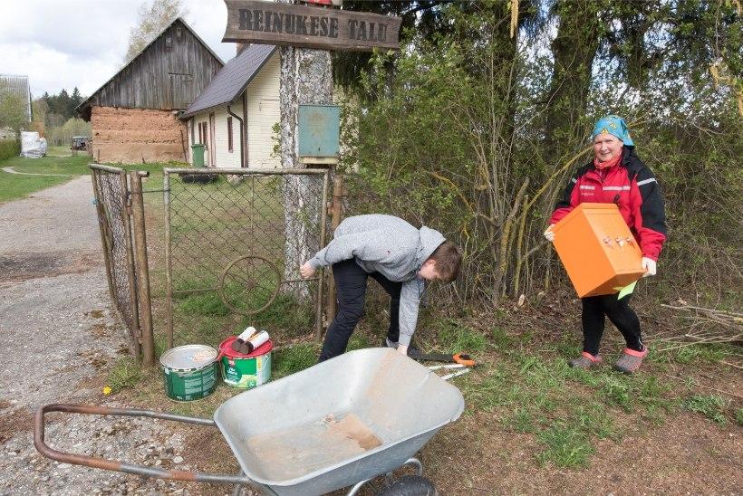 FOTOD   Uued postkastid, oja puhastamine, talvepuud riita: talgupäev on enamat kui prügikoristamine