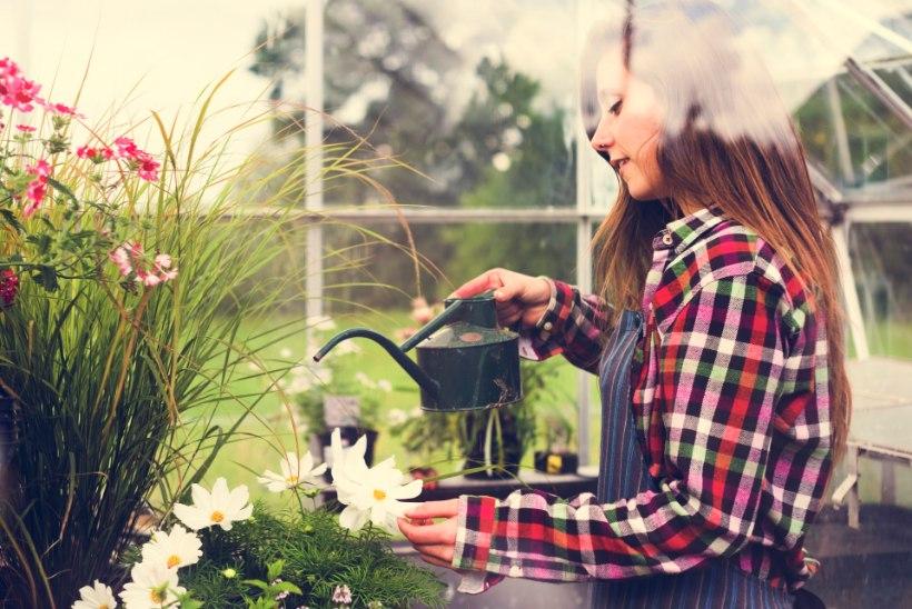 PANE TÄHELE: see on maikuu aiatööde meelespea!